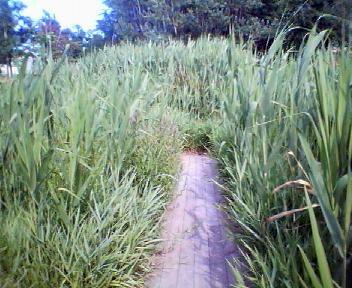 サクシュコトニ川緑地の夏_f0078286_154982.jpg