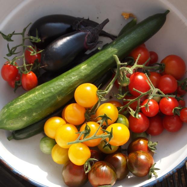 収穫、収穫_a0292194_16283343.jpg