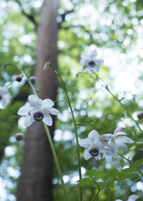 森の妖精達_e0238623_1940159.jpg