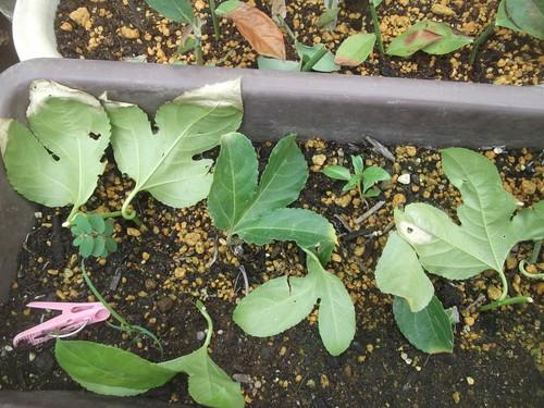 秋野菜の種まき.._b0137932_13513164.jpg