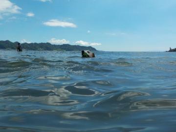 泳ぎまくる犬_d0143957_13292080.jpg