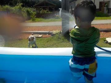 泳ぎまくる犬_d0143957_1330447.jpg