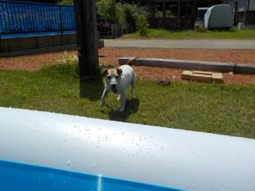 泳ぎまくる犬_d0143957_1331255.jpg