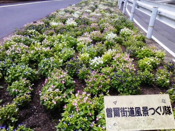 2016/8/7 プランター水やり_a0277170_05572467.jpg