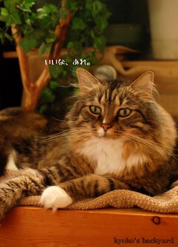 使う姉猫、羨ましがる弟猫_b0253205_04420172.jpg
