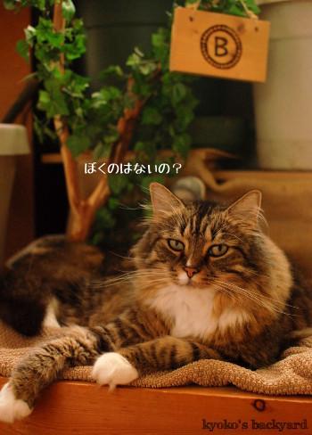 使う姉猫、羨ましがる弟猫_b0253205_04421180.jpg
