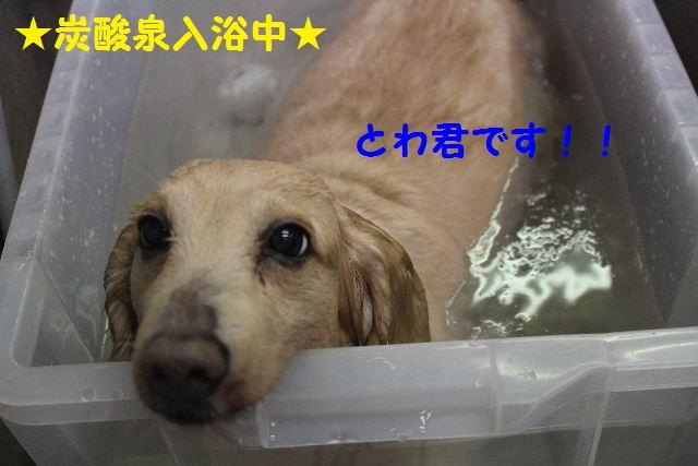 サプライズ~!!_b0130018_71215.jpg
