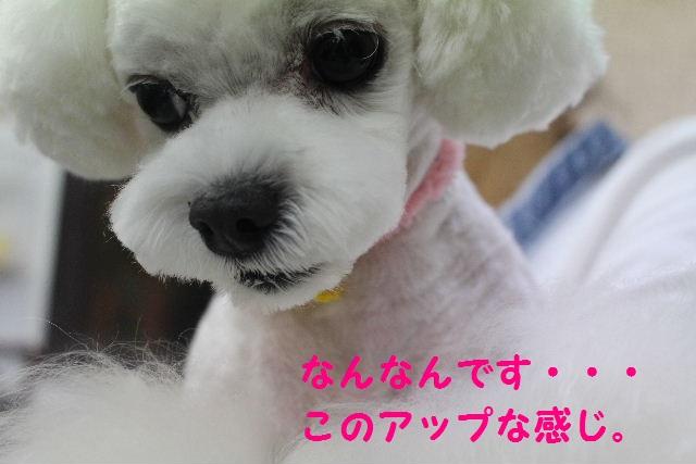 サプライズ~!!_b0130018_7143419.jpg