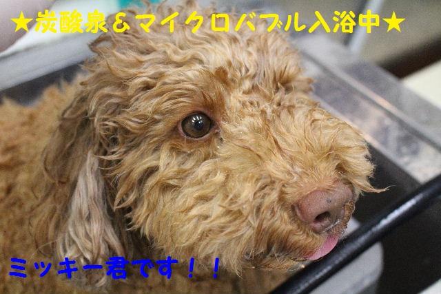 サプライズ~!!_b0130018_7152128.jpg