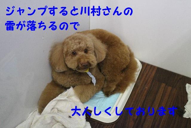 サプライズ~!!_b0130018_7163793.jpg