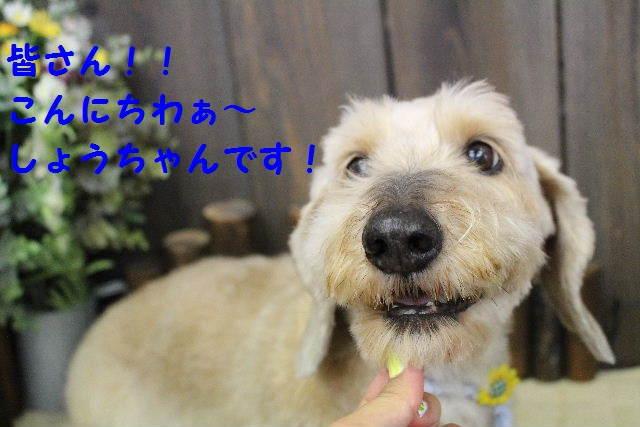 サプライズ~!!_b0130018_7213518.jpg