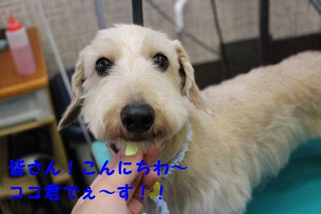 サプライズ~!!_b0130018_7221072.jpg