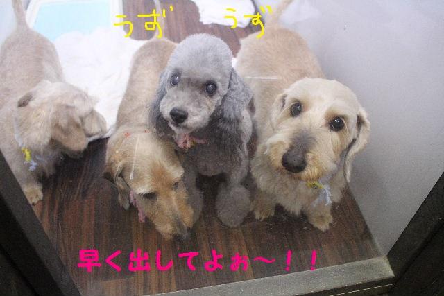 サプライズ~!!_b0130018_7223265.jpg