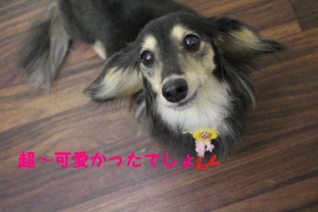 サプライズ~!!_b0130018_7255638.jpg