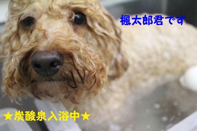 サプライズ~!!_b0130018_7275387.jpg