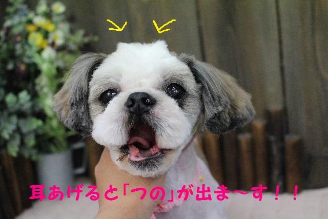 サプライズ~!!_b0130018_7303034.jpg