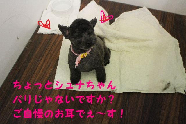 サプライズ~!!_b0130018_73298.jpg