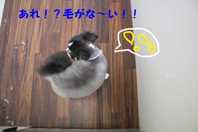 サプライズ~!!_b0130018_7335411.jpg