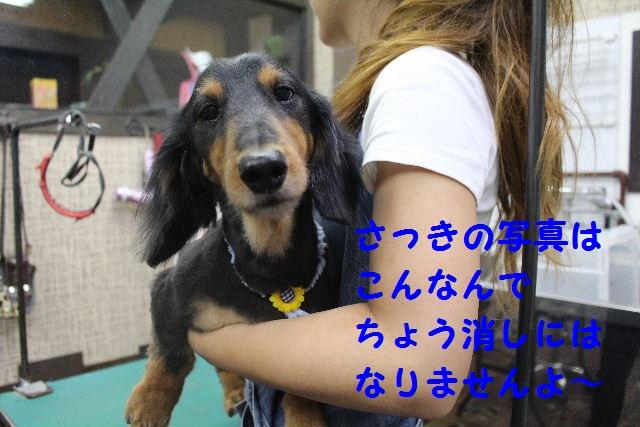 サプライズ~!!_b0130018_7353942.jpg