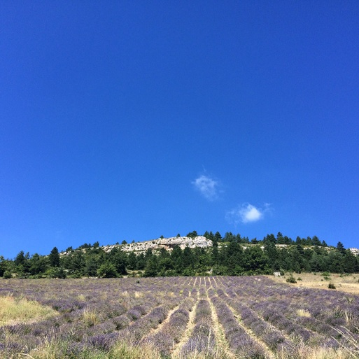 Le dernier champ de lavande「季節外れのラベンダー畑」_c0181241_1724720.jpg