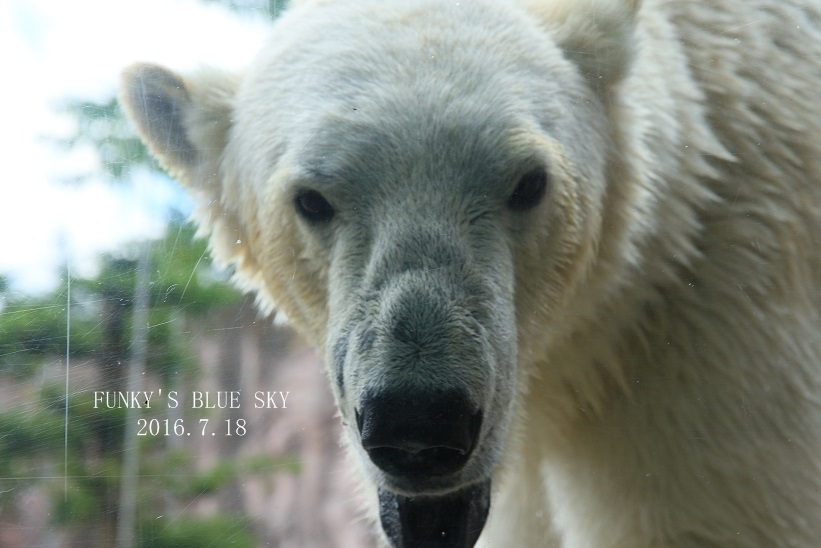 動物園に行こう♪・その3_c0145250_09495539.jpg