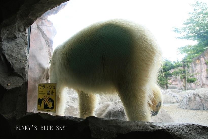 動物園に行こう♪・その3_c0145250_09495786.jpg