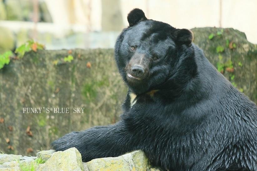動物園に行こう♪・その3_c0145250_09501484.jpg