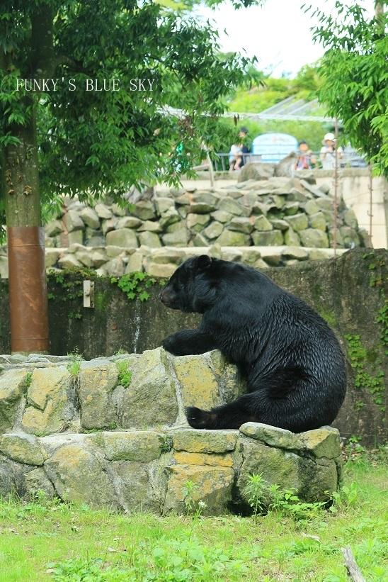 動物園に行こう♪・その3_c0145250_09501705.jpg