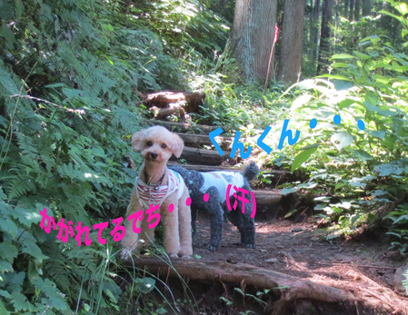 御岳山を大塚山コースで_a0109467_2244477.jpg