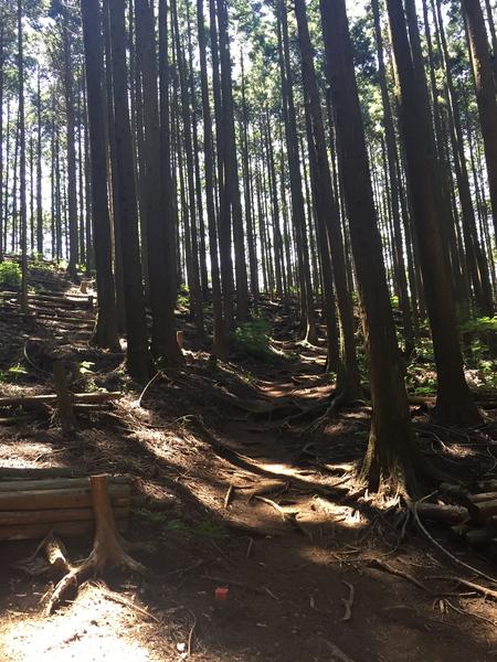 御岳山を大塚山コースで_a0109467_225332100.jpg