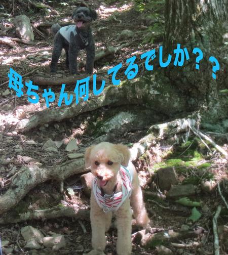御岳山を大塚山コースで_a0109467_23132788.jpg