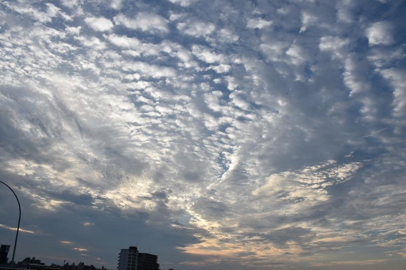朝んぽと、すてきな雲祭り♪ (*^_^*)_c0049299_22233987.jpg