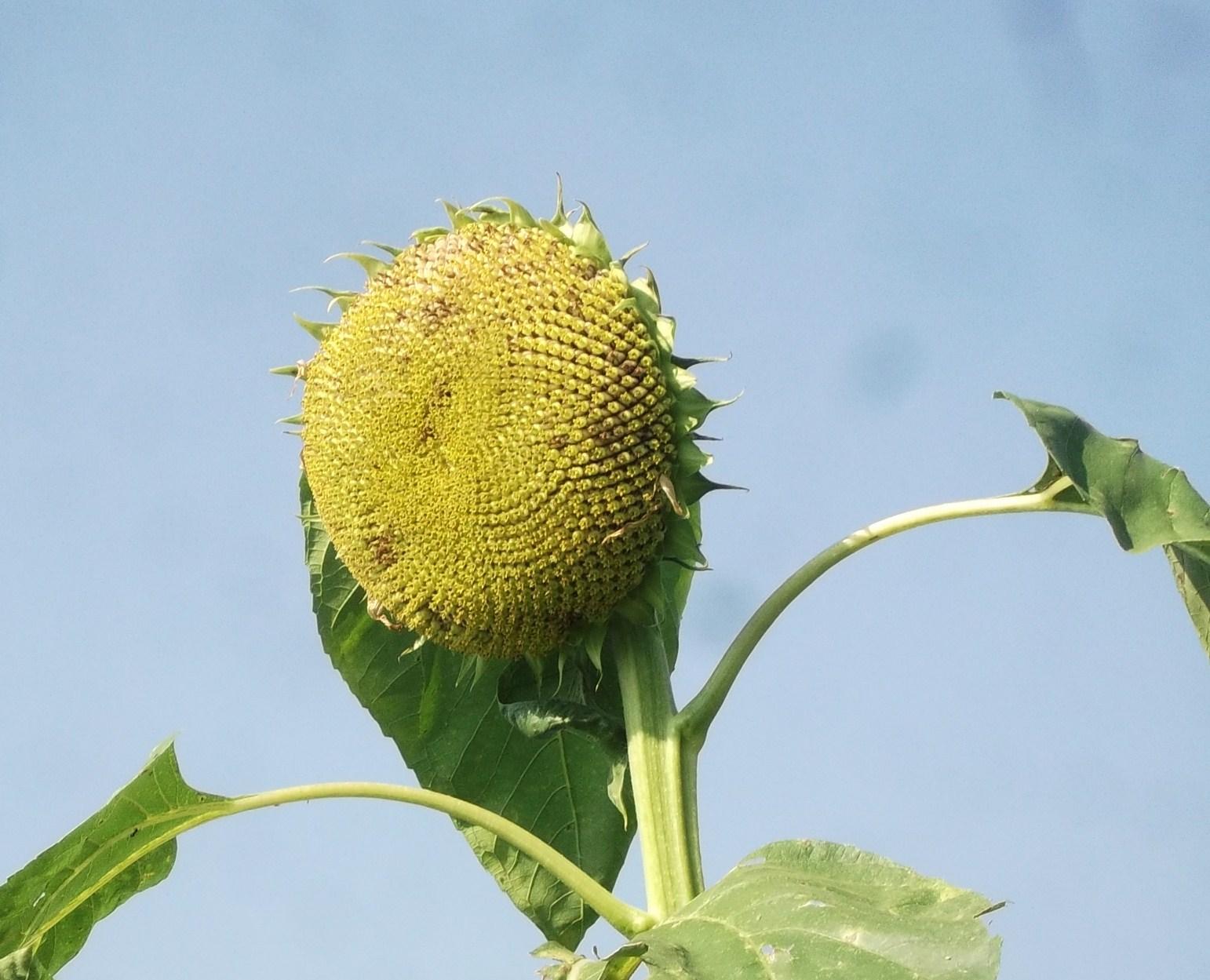 野菜の収穫_b0137932_13393692.jpg