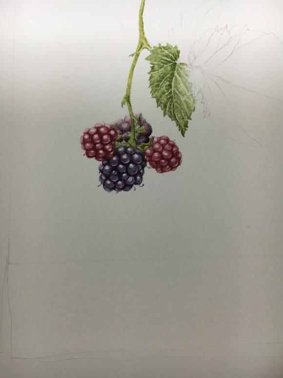 Blackberry_c0206645_9525157.jpg