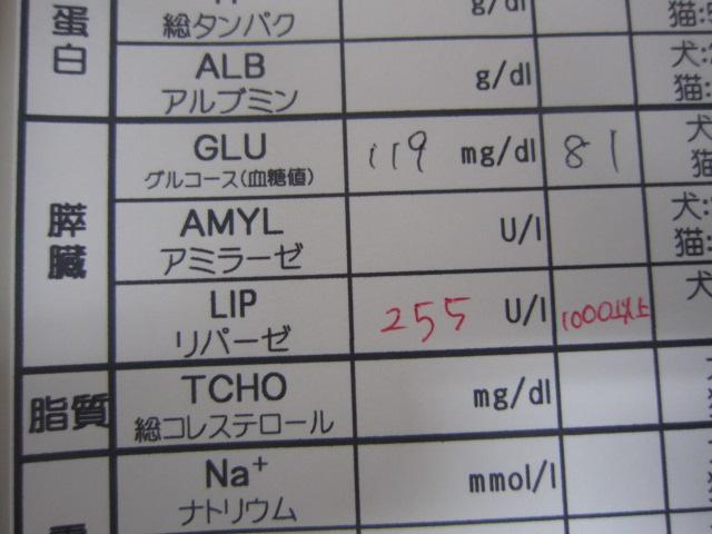 【横たわって来院 急性膵炎】_b0059154_14415136.jpg