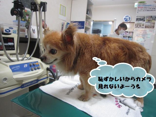【横たわって来院 急性膵炎】_b0059154_14452763.jpg