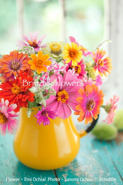 夏を彩るカラフルジニアのアレンジ♪_b0138802_22135946.jpg