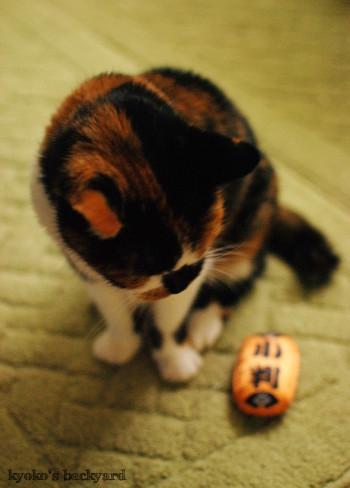 猫に小判_b0253205_04053846.jpg