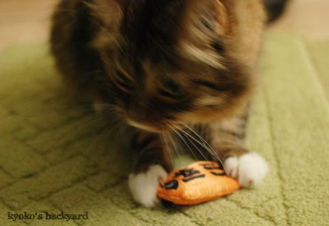 猫に小判_b0253205_04072628.jpg