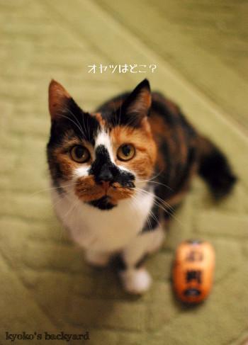 猫に小判_b0253205_04132078.jpg