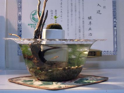 ミニ・ビオトープで、涼しさを演出。Let\'s Eco-Life。_e0120614_1813376.jpg