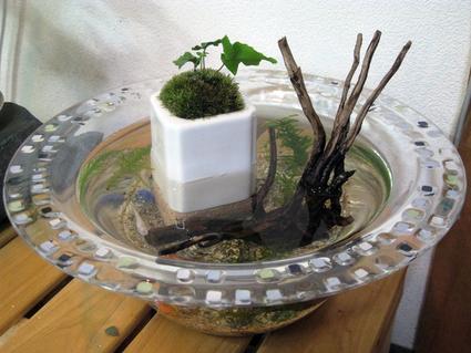 ミニ・ビオトープで、涼しさを演出。Let\'s Eco-Life。_e0120614_1891867.jpg