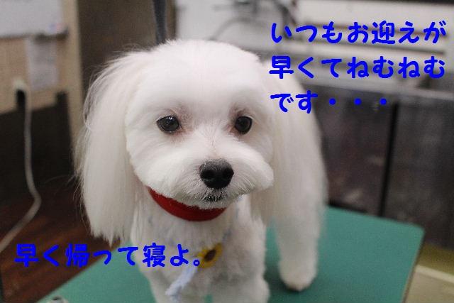 b0130018_764590.jpg