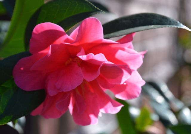 近づいてきた春_f0155522_07252146.jpg