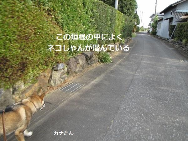 f0143123_10583472.jpg