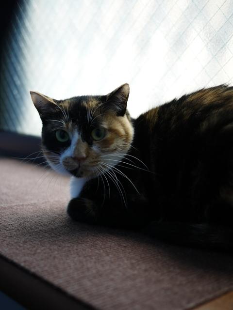 猫のお留守番 ごまちゃん編。_a0143140_20525956.jpg
