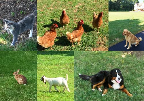 Amish farm stay  アーミッシュ ファームステイ_e0253364_19485671.jpg