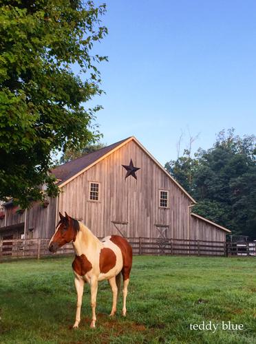 Amish farm stay  アーミッシュ ファームステイ_e0253364_19542857.jpg