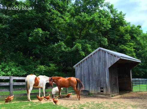 Amish farm stay  アーミッシュ ファームステイ_e0253364_19543420.jpg