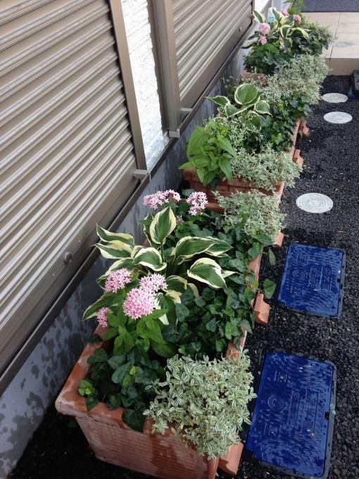 0808  花壇のお花交換諸々_b0167282_12224913.jpg